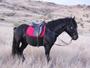 Promenade et balade à cheval à la Réunion