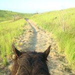 Randonnée à cheval à la Réunion